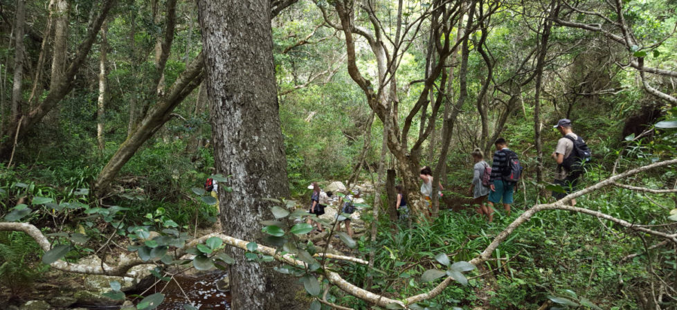 Knysna Guided Forest Walks